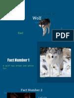 animal report kael