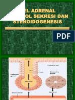 Gland Suprarenalis