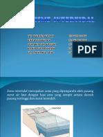 Org. Inter Tidal (Kel.1)