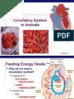 circulatory2008