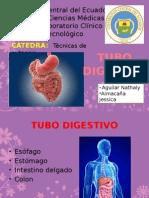 Tubo Digestiv