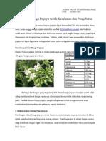 10 Manfaat Bunga Pepaya Untuk Kesehatan Dan Pengobatan