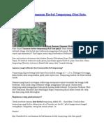 Resep Ramuan Tanaman Herbal Tempuyung Obat Batu Ginjal