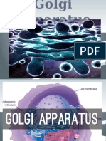 chapter 8 golgi apparatus
