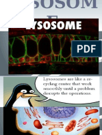 chapter 10 lysosome