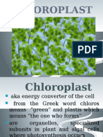 chapter 5 chloroplast