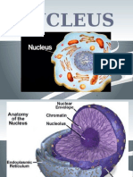 chapter 14 nucleus