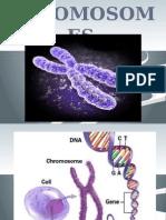 chapter 17chromosomes