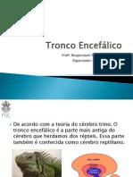 05_tronco_encefalico