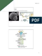 223.19 Endocytosis Exocytosis2015