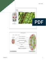 223.16_Chloroplasts2015
