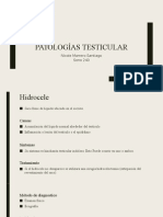patologias testicular