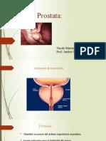 presentation prostata sono 240