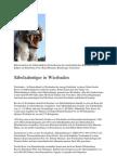 Saebelzahntiger in Wiesbaden