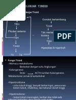 fisiologi-kelenjar-tiroid