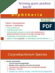 Corynbacterium 2-12-2015.pptx