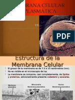 Membranacelur