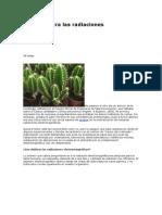 Cactus Contra Las radiaciones