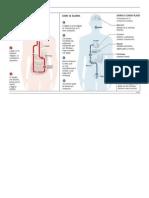 Alcohol Efectos en el Cuerpo 1 Pag.docx