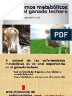 Hipocalcemia,Vacas Caidas