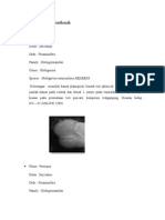 Fosil Foraminifera Benthonik