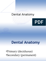 2013 Lecture 1 Dental Anatomy