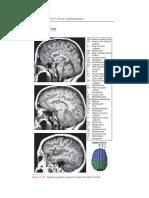 Lippincott_s Pocket Neuroanatomy - Gould, Douglas J. [MRI]