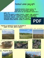 Ecosistemul Unei Pajişti  biologie