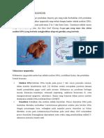Epigenomic Dan Epigenetik