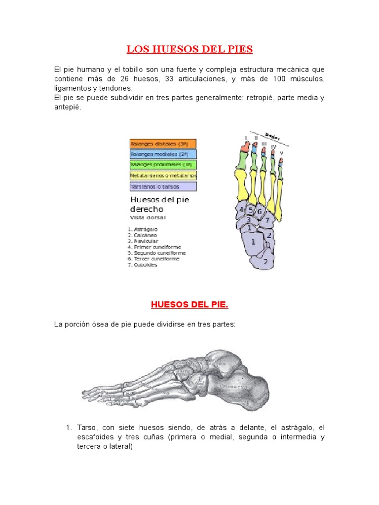Los Huesos Del Pies
