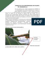 Reporte de Diagnostico de Enfermedad en Planta de Granadilla