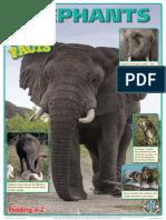 Elephants Poster Copy