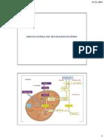 18 Anabolismo de lípidos - Síntesis de los ácidos grasos, triglicéridos y colesterol
