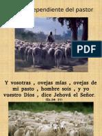 Ovejas de pendiente del pastor