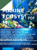 Evs Project Marine Ecosystem