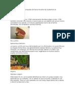 Entre Las Especies Amenazadas de Fauna Silvestre de Guatemala Se Encuentran