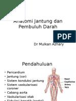 Anatomi Kardiovaskular