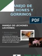 MANEJO DE LECHONES Y GORRINOS.pptx