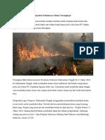 Penyebab Kebakaran Hutan Terungknfkldklvbdklbvsdbap