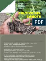 CULTIVO DEL CAMOTE (1).pptx