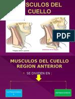Anatomia...