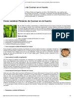 Cultivación de Pimiento Verde