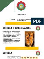 semilla.ppt