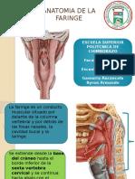 anatomadefaringe-130807234750-phpapp01