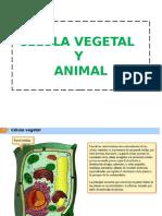 Celula Animal y Vegetal