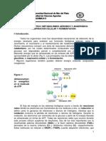 8_TP_respiracion_2014 (1).pdf