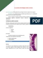 Sistema Cardiovascular Histologia