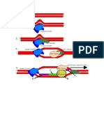 Steps in DNA Replication in Prokaryotes
