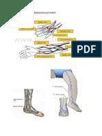 Anatomi Tempat Pemasanagan Infus