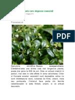 CIMISIR - Planta Cancer